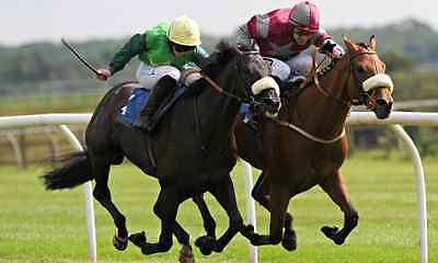 288 Selections, 233 Winners, 80% Strike Rate, 400 Points! (Horse Racing System).