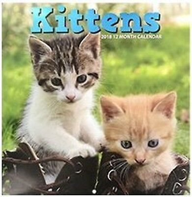 Kittens 2018 Wall Calendar 12 Month NEW SEALED FULL SIZE Baby Cats
