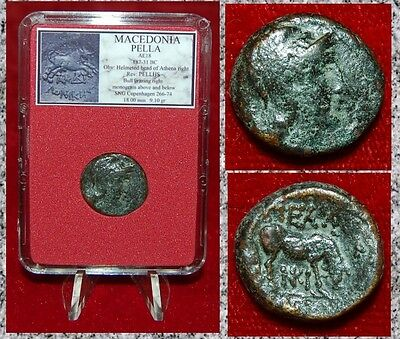 Ancient Greek Coin MACEDONIA PELLA Helmeted Athena and Bull On Reverse