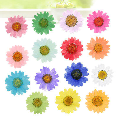 30Pcs Pressed Flowers Dried Daisy Petals Nothirdtime DIY Epoxy Floral Craft