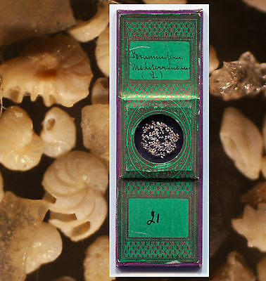 """Green Papers"" Foraminifera Microscope Slide - ca. 1870"