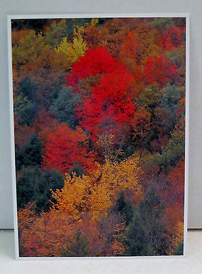 Vermont Fall Foliage Tree Leaves Red Orange Green Ash and more