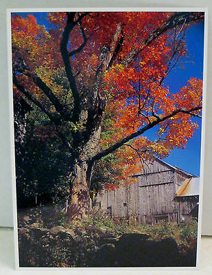 Vermont Fall Foliage Old Weathered Texture Leaves Red Orange Green Ash and more