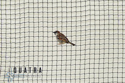 Sparrow exclusion netting, Professional Grade Knotted 19mm - 20m X 20m