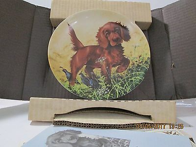 Knowles Bradford Exchange Collectible Plate Missing the Point Irish Setter 1988