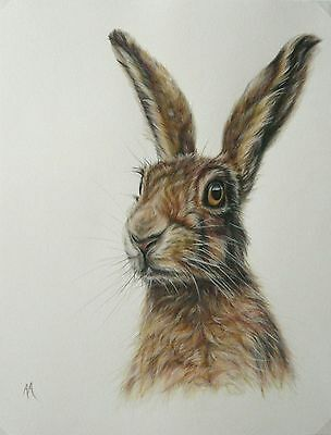 Original Colour Pencil Drawing by Alison Armstrong - Wildlife - Brown Hare