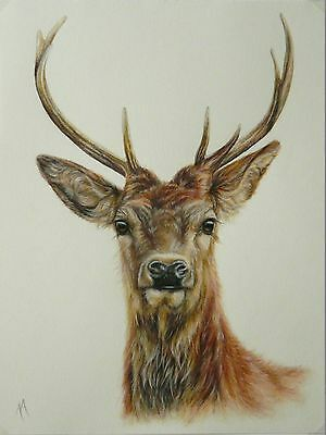 Original Colour Pencil Drawing by Alison Armstrong - Wildlife - Red Deer Stag