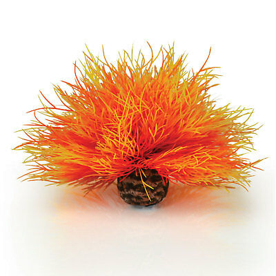 Biorb Flame Orange Sea Lily