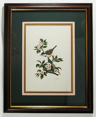 Ornithology Finch Wren Bird Painting Warbler Flower Branch Very Detailed Signed