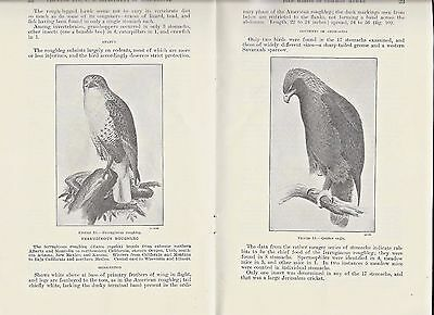 1935 softcover FOOD HABITS OF COMMON HAWKS