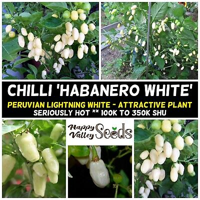 Chilli 'Habanero White' 25 Seeds, Extreme Hot  vegetable garden VERY HOT *DEAL*
