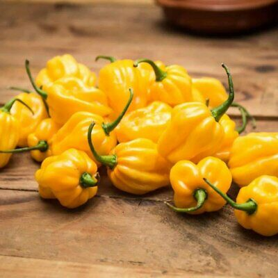 Chilli HABANERO YELLOW 10 Seeds INTENSELY HOT Chili Chile Pepper SPICY Vegetable