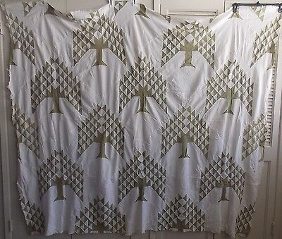 Great Antique Pine Tree Quilt Top 1900s Olive Green and White Unfinished Quilt