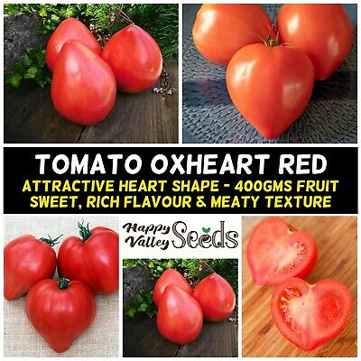 excellent flavoured Tomato Oxheart 20 Seeds plenty of fruit