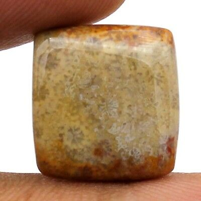 12.55 cts Natural Designer Fossil Coral Gemstone Untreated Square Loose Cabochon