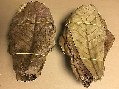 1 kg Tropical Almond Tree Leaves~20cm (More Than 500 Pieces) Catappa Leaves in