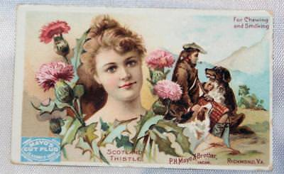 Antique 1800's Victorian Trade Card Advertising Tobacco Adv.  Mayo's Cut Plug