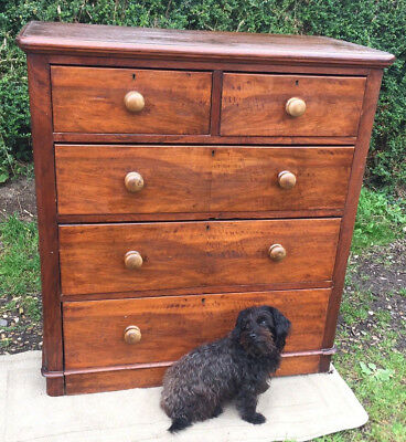 Victorian Chest Of Drawers - Antique - Somerset Ta20 - Dog Not Included !