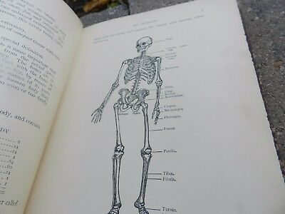 Vintage Antique 1909 Text Book Anatomy For Nurses Color Illustrations Skeleton