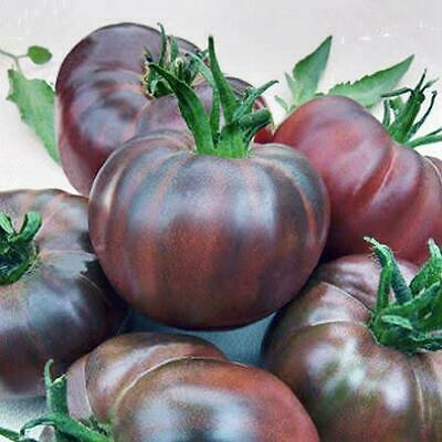TOMATO 'Black Russian' HEIRLOOM seeds UNUSUAL Exceptionally TASTY Recommende
