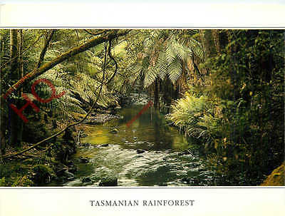 Picture Postcard:-Tasmania, Tasmanian Rainforest