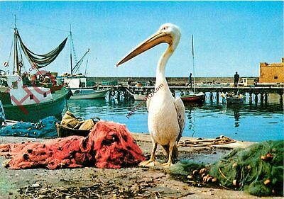 Picture Postcard; Cyprus, Gogos The Pelican