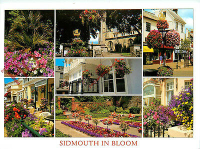 Picture Postcard~ Sidmouth in Bloom (Multiview) Flowers