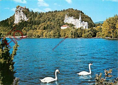 Picture Postcard: Bled