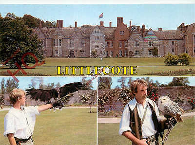 Picture Postcard:;Littlecote, Falconry
