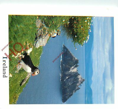 Picture Postcard:;Ireland, Puffin