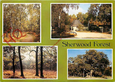 Picture Postcard--Sherwood Forest (Multiview)