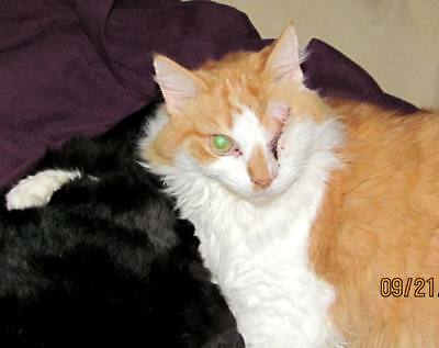 FOR SALE: RESCUED KITTY CAT or KITTEN PHOTO ~Cats_Meow_Antiques_Cat_Rescue