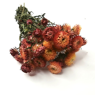 Dried Flowers Salmon Helichrysum Bouquet Straw Flower Bunch Floral Decor