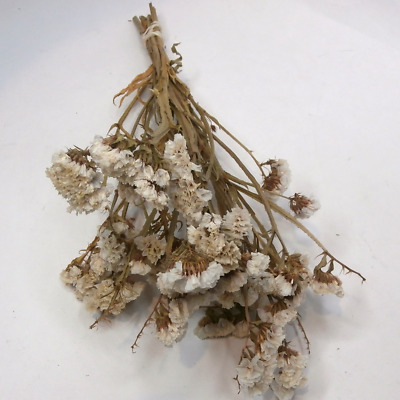 Dried Flowers Statice White bouquet Sea Lavender Bunch Dried Flower Floral Decor