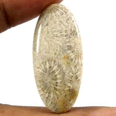 19.60 cts Awsome Designer Natural Fossil Coral Cabochon Oval Gemstone Jewelry