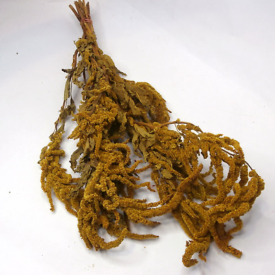 Dried Flowers Hanging Amaranthus Bouquet Yellow Flower Bunch Lavender Bunch