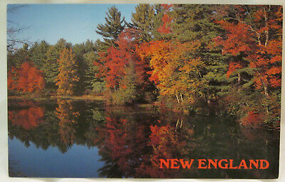 Autumn Reflections New England Postcard