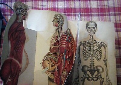 ~ Rare 100 year old Antique Medical illustrated Book illustrations Diseases