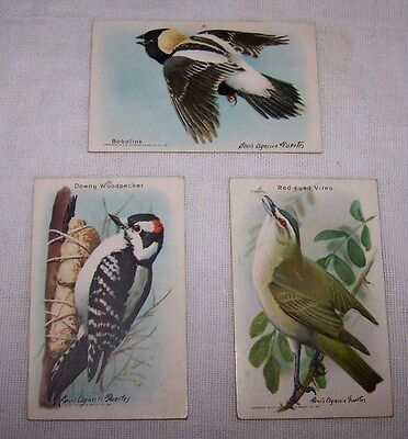 3-Arm & Hammer/cow Brand Baking Soda Trade Cards-9Th Series-Useful Birds-#9-5-7