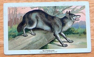 1890 K1 Arbuckle Coffee Animals - Indian Wild Dog (Buansuah) - VG