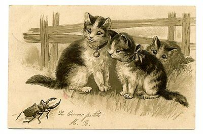 vintage cat postcard curious cats watch large horned beetle