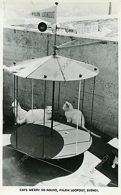 vintage cat postcard photo Cats Merry Go Round Lookout Sydney Harbor CAT CHARITY