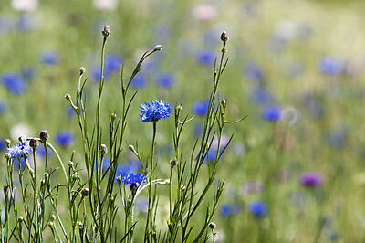 Best 6 Annual Mixed Lot 100% Wildflower Conservation Mix - 10g