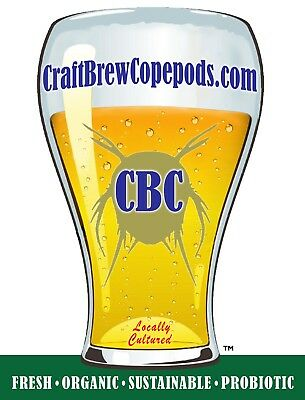 """Copepods!  3 x """"Pints"""" (9000+Copepods)!  By CraftBrewCopepods!"""