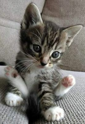 FOR SALE: CAT RESCUE PHOTO ;Help Feed Cats &Kittens~Food~Vet Care~Supplies