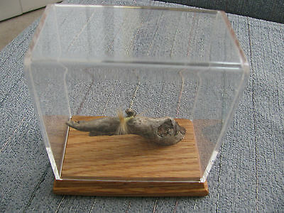 "Vintage Mounted Fishing Fly in Oak Acrylic Case 4-1/2"" Tall 4"" Wide Made in PA"