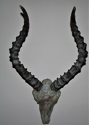 "16""  African Impala Horns Antelope Skull Animal Wall Trophy"
