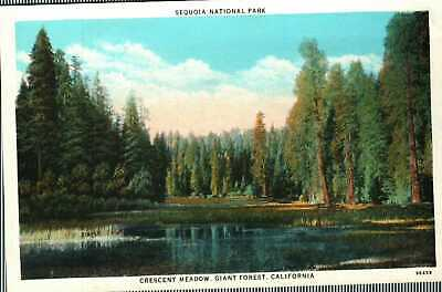 Postcard Sequoia National Park Crescent Meadow Giant Forest California Unused