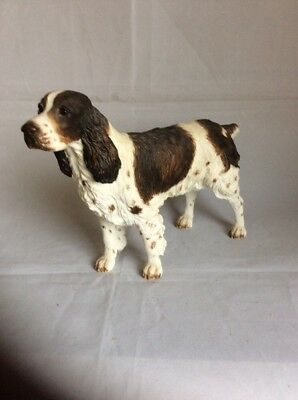 Border Fine Art - English Springer Spaniel Standing - Liver & White