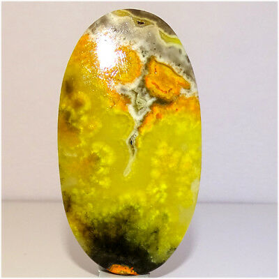 100% NATURAL BUMBLE BEE JASPER CABOCHON LOOSE 60X33X04MM GEMSTONES 76.80Cts.
